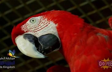 AL AZIZIA BIRDS KINGDOM – 60 SECONDS